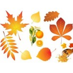 Апельсиновая осень