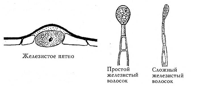http://velvet-forest.ru/image/data/Articles/External.jpg